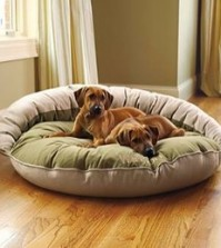 Different Types Of Dog Beds For Large Dogs