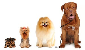 Dog Breeds By Size
