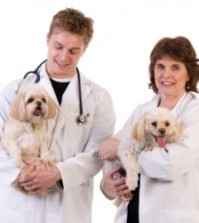 Dog Health Insurance To Protect Your Pet All The Times