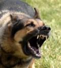 Dog barking Problems