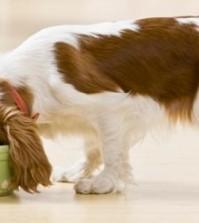 Organic Dog Foods
