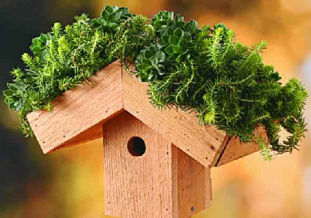 Bird House 19