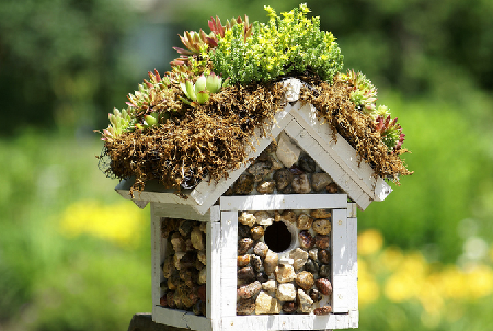 Bird House 29