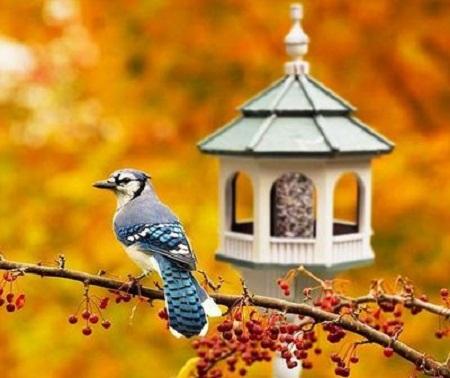 Bird House 48