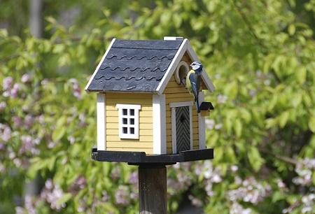 Bird House 5