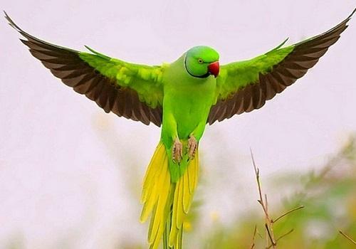 Pet Birds Healthy