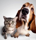 best pet health insurance plans