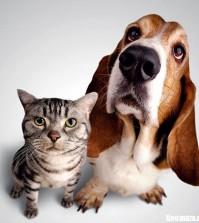 best pet health insurance plans