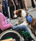 How Can Pets Help Handicapped People