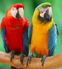 Good Pet Birds for Teenagers