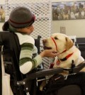 How Do Dogs Help People with Disabilities