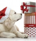 Holiday Gifts for Pets