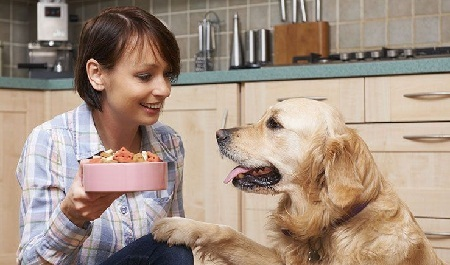 How to Choose Best Dog Foods