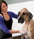 Pet Grooming Ideas