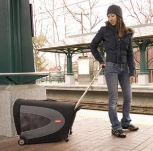 Dog Travel Carriers
