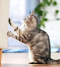 Common Cat Behavior Problems