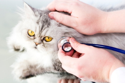 Common Cat Illnesses