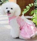 dog dresses for wedding