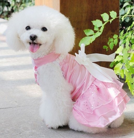 Interesting Facts About Dog Dresses For Wedding