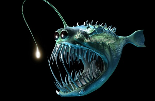 When anglerfish male finds a suitable mate he bites into for Angler fish ark