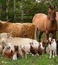 Best Farm Animals