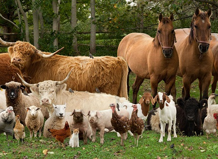 Best Farm Animals