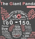 Most Interesting Things About Giant Panda