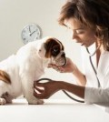 Dog Sickness Symptoms
