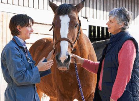 Horse Disease Symptoms