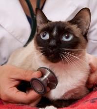 Cat Illness Symptoms