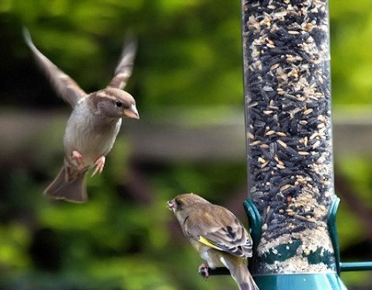 Homemade Bird Feeder Ideas