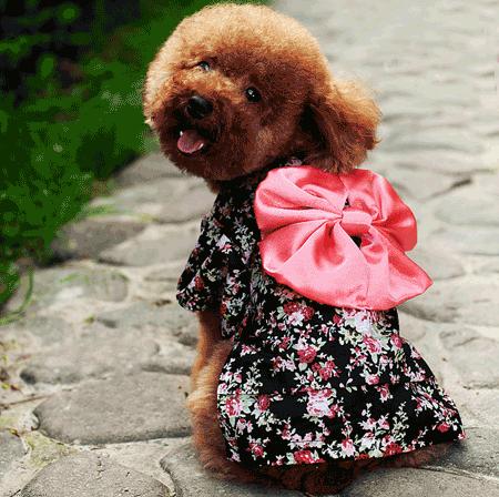 Dog formals