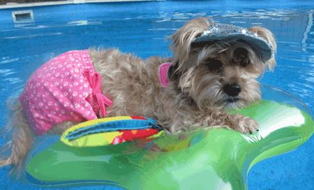 Dog swimwear