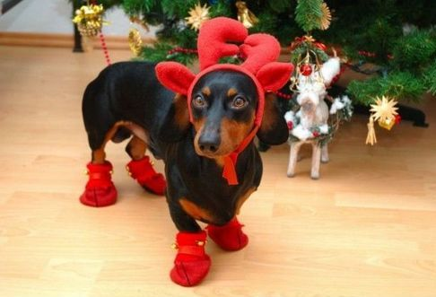 Dog Christmas Costume - Reindeer