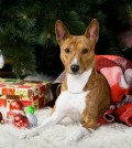 Dog Safety Tips during Christmas