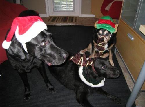 Kyjen Dog Santa Hat