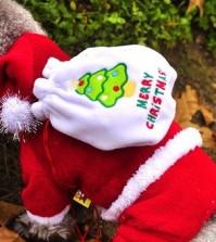 5 Eye-Catching Christmas Dog Costume Ideas
