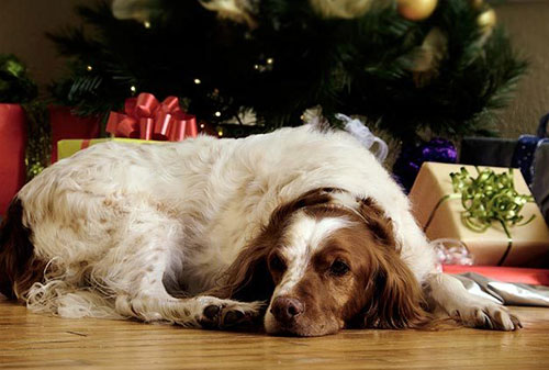 Holiday Safety Tips for Pet Lovers