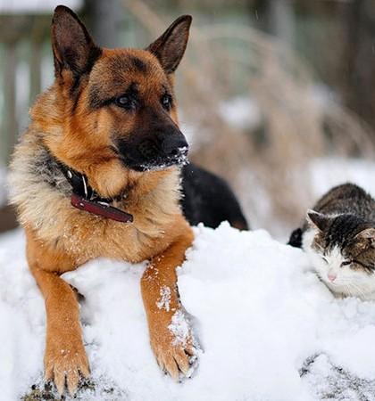 Pets Safe during Frigid Temperatures