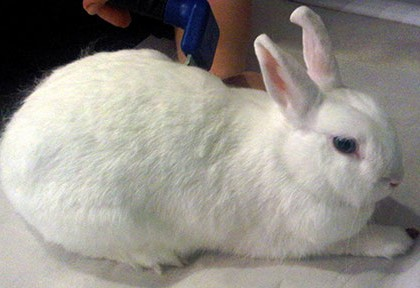 Rabbit Diseases and Treatments