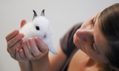 4 Important Steps For Feeding Baby Bunnies