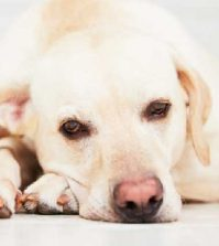 5 Ways to Identify Depression in Pets
