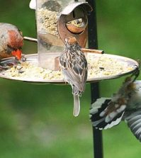 How To Attract The Birds With A Bird Feeder?