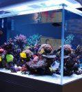 Tips for Setting Salt Water Fish Tank
