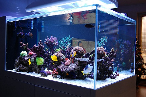 how to create a saltwater fish tank