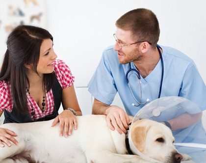 Top 6 Tips to Care for your Dog after Surgery