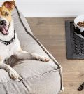 10 Must-have Dog Accessories