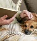 5 Tips for Caring For Senior Dogs