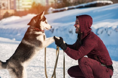 Beneficial Winter Exercise for Dogs