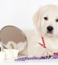 Essential Dog Makeup Tips